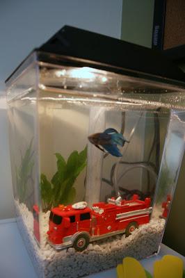 homeschool room pet aquarium