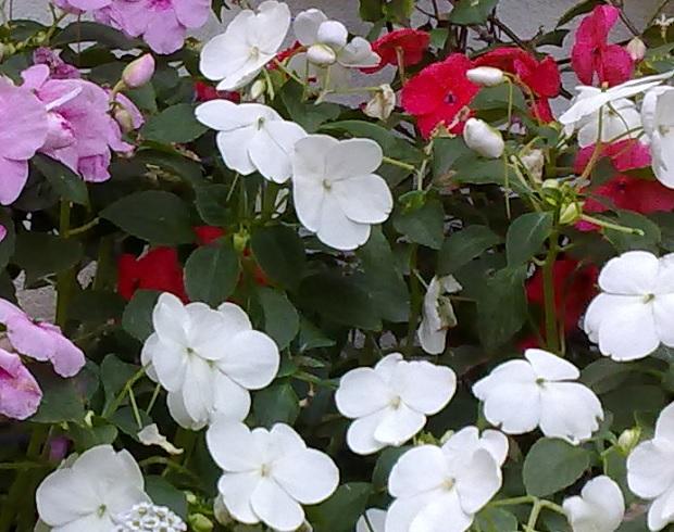 Alegr a de la casa guia de jardin - La casa de la alegria ...