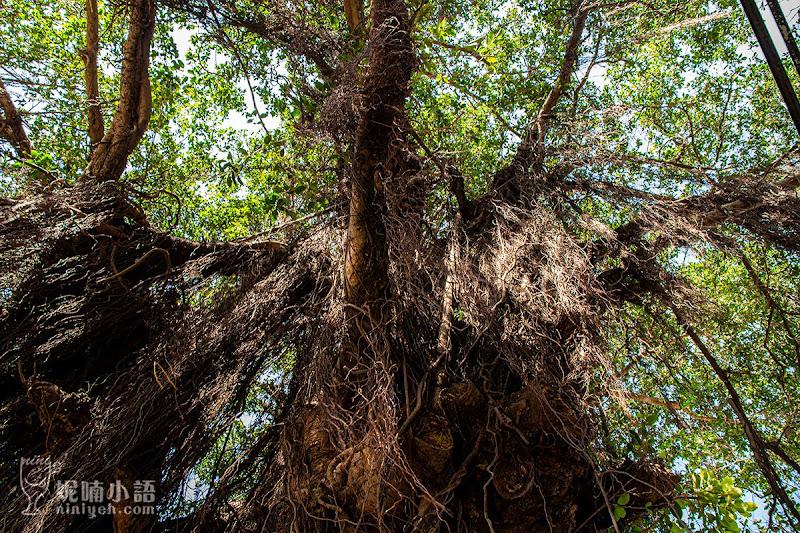 【台南景點】安平樹屋。超怪異!嘖嘖稱奇的百年樹屋