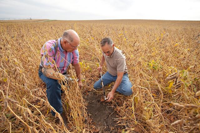 soil test p phosphorus fertilizer