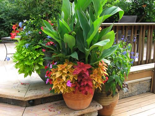 Container Garden Ideas: Dr. Dan's Garden Tips: February Tips For Container Gardening