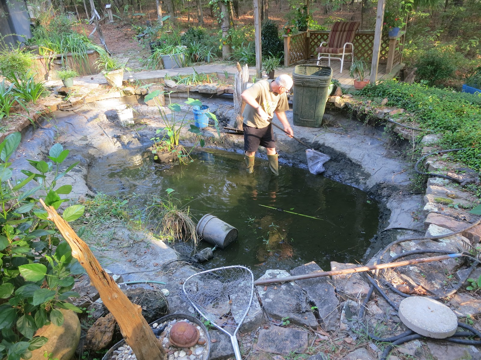 Prunepicker mucking out the koi pond for Koi pool liners