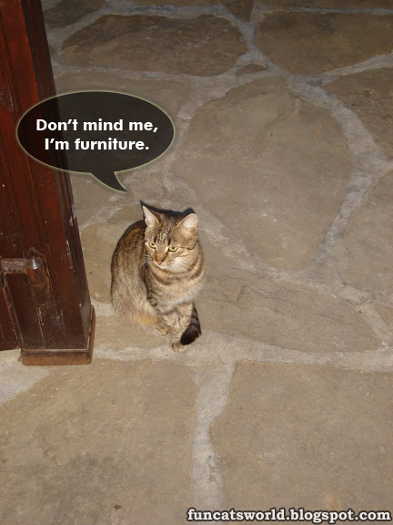Cat Thinks She is a Furniture