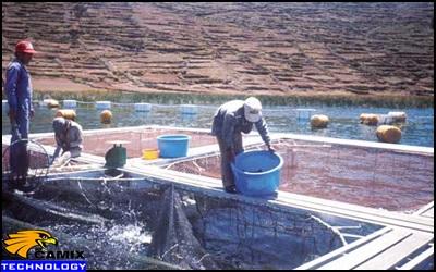 Công ty thiết kế công nghệ xử lý nước thải thủy sản - Thành phần nước  thải thủy sản