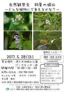 5/28 自然観察会 初夏の城山~どんな植物に出会えるかな?~