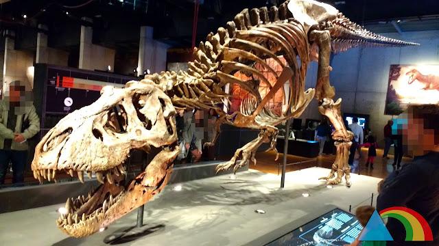 Tyranosaurus Rex Trix en la exposición de CosmoCaixa Barcelona