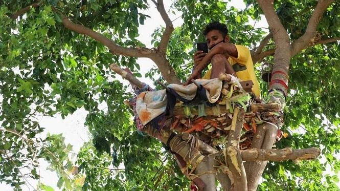 Un joven vivió 11 días en un árbol para no contagiar a su familia de coronavirus