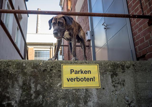 Ein neues Zuhause sollte gut gewählt sein, damit es nicht nur ein weiterer Parkplatz ist... Foto:Lutz Borger