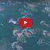 Video 'Ikan Duyung' Alir Keluar!! Adakah 'Ikan Duyung' Benar-benar Wujud?