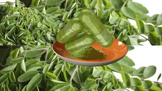le moringa oleifera
