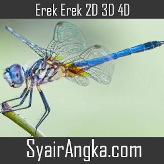 Erek Erek Capung 2D 3D 4D di Buku Mimpi dan Kode Alam