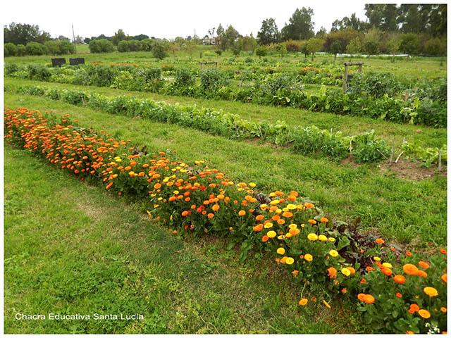 Canteros con hortalizas y flores- Chacra Educativa Santa Lucía
