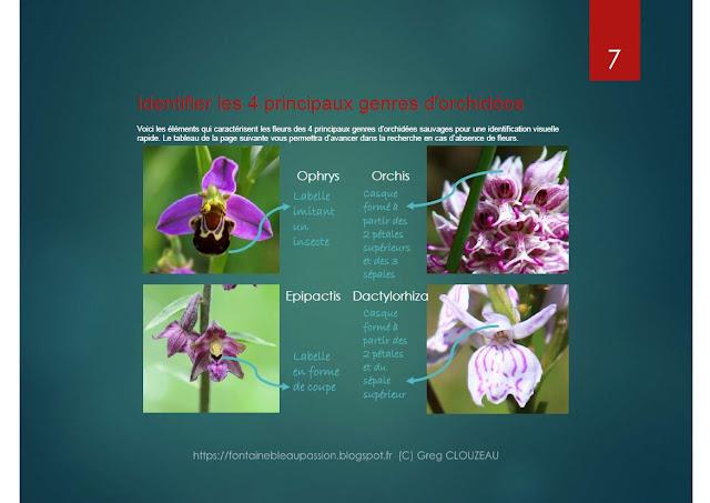 Identifier les orchidées sauvages d'Ile-de-France