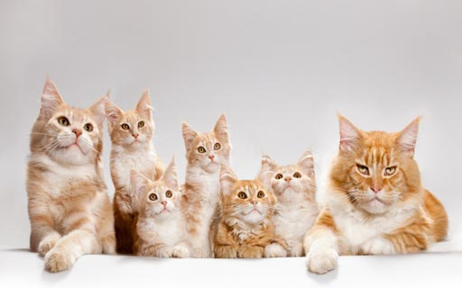 Cute Cat Pictures - Cats Images - Cat Photos - Funny Cat Pictures - Picture of a Cat
