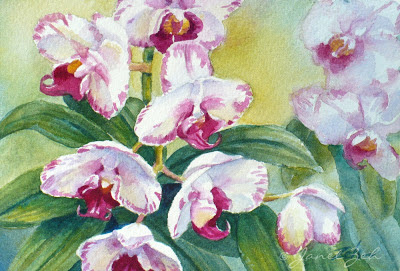 White orchids with magenta-pink markings