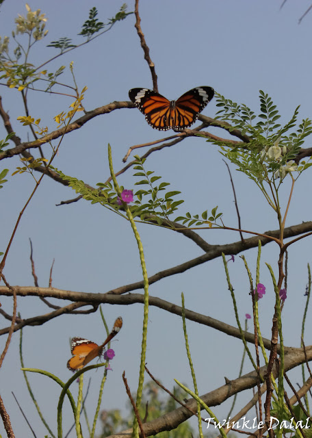 Wildlife Photography, Butterfly Garden, Thane