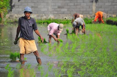 Pengertian Pertanian Organik Dan Kelebihannya