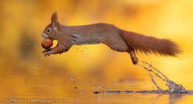 Fantastically Outstanding Squirrel Photography by Dick van Duin