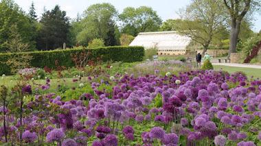 Borduras de herbáceas en RHS Garden Harlow Carr: Main Borders