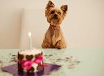 FREE Birthday Surprise for Your Pet (PetSmart Treats)