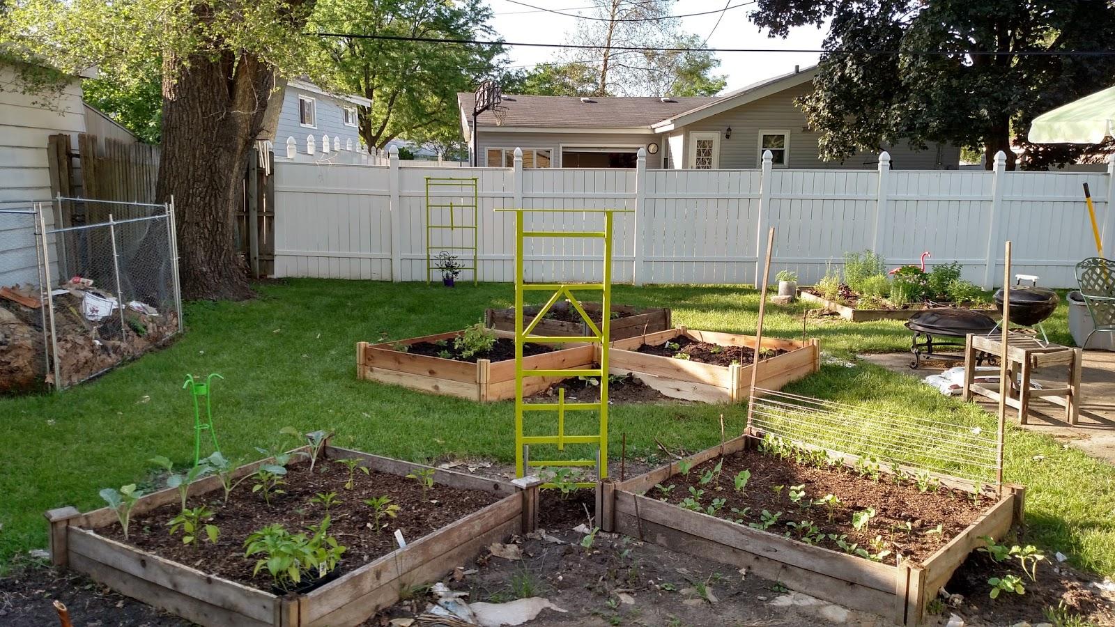 Backyard Patch Herbal Blog Backyard Garden Update