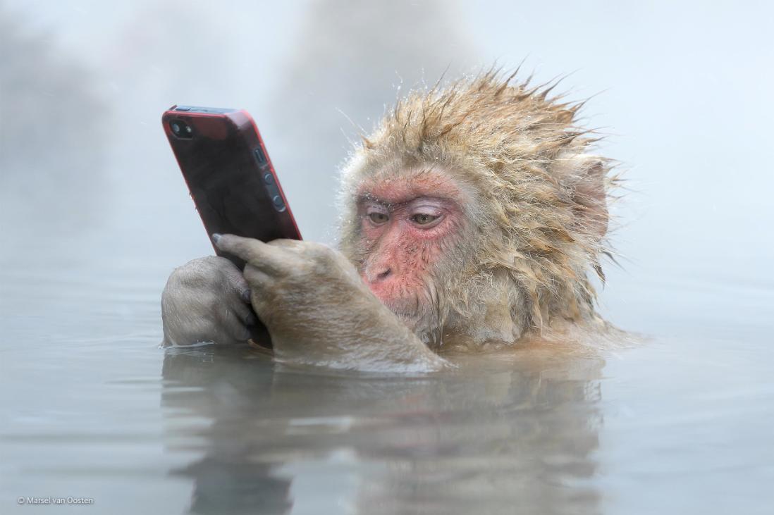 snow-monkey-.png