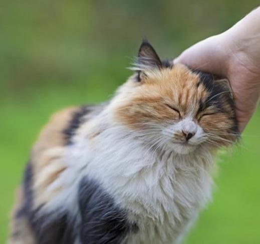 """قطتي تحبني"" ""قطتي تحبني كثيرا"" ""قطتي لا تحبني"" ""هل قطتي تحبني"" ""كيف قطتي تحبني"" ""كيف اجعل قطتي تحبني"" ""كيف اخلي قطتي تحبني"" ""كيف اعرف قطتي تحبني"" ""كيف اجعل قطتي تحبني بجنون"" ""قطتي لا تحب ان المسها"" ""قطتي لا تحب ان احملها"" ""قطتي لا تحب الدراي فود"" ""قطتي لا تحب اللعب"" ""قطتي لا تحب القطط"" ""لماذا قطتي لا تحبني"" ""كيف اعرف ان قطتي لا تحبني"" ""قطتي لا تسمع"" ""كيف تصبح قطتي تحبني"" ""كيفية جعل قطتي تحبني"" ""كيف اعرف ان قطتي تحبني"" ""كيف اعرف اذا قطتي تحبني"" ""كيف اجعل قطتي تحب الماء"" ""كيف اجعل قطتي الجديده تحبني"" ""كيف اجعل قطتي الصغيرة تحبني"" ""كيف اجعل قطتي تحب قطة جديدة"" ""ازاى اخلى قطتى تحبنى"" ""كيف أجعل قطتي تحبني"" ""كيف اجعل قطة تحبني"" ""كيف تجعل قطتك تحب الماء"" ""كيف اعلم ان قطتي تحبني"" ""كيف اعرف اذا كانت قطتي تحبني"" ""ازاي اعرف ان قطتي تحبني"" ""قطتي لا تحب أن المسها"""