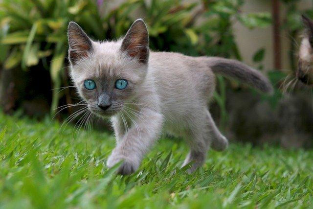 Comment choisir un nouveau chaton