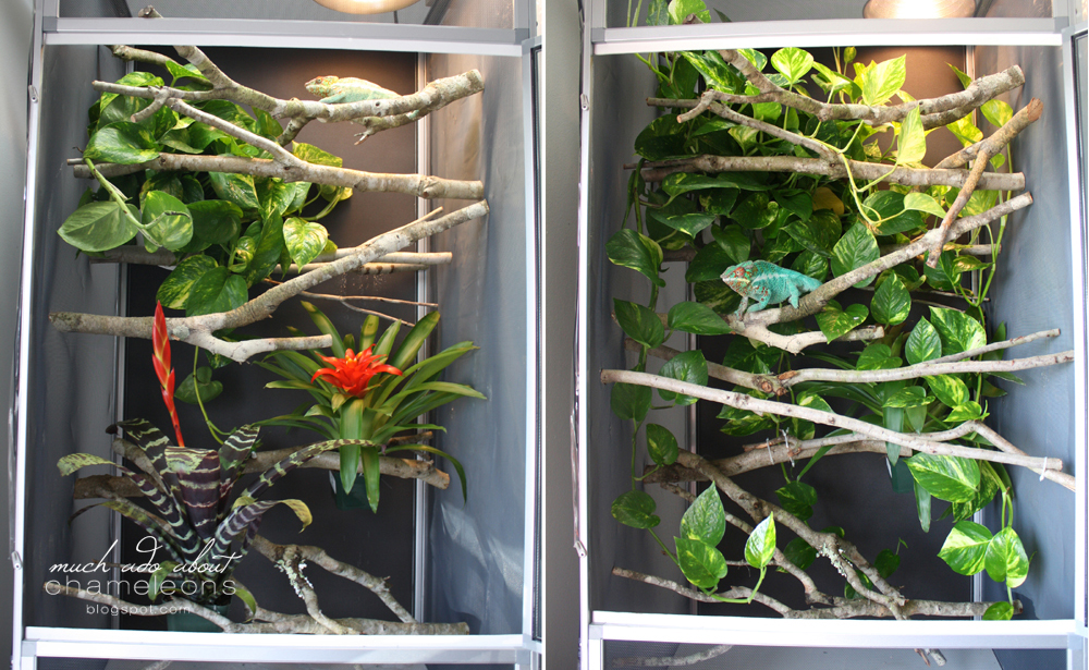 My Chameleon Room & Cages | Much Ado About Chameleons