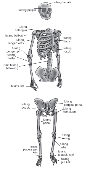 kelainan pada sistem gerak, kelainan pada tulang, skoliosis, pengertian skoliosis, lordosis, pengettian lordosis, kofisis, pengertian kifosis, fraktura, yang dimaksud fraktura, pengertian osteoposrosis, pengertian rakitis, gangguan pada persendian, macam-macam gangguan pada persendian, ganguan otot.