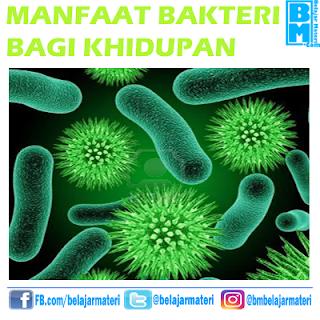 Manfaat Bakteri Bagi Kehidupan Manusia