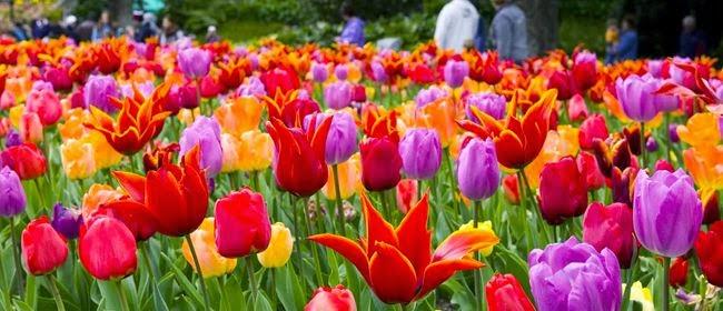 10 Inspirational Botanic Gardens | Wellington Botanic Gardens, New Zealand