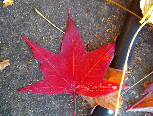 A dark red leaf.