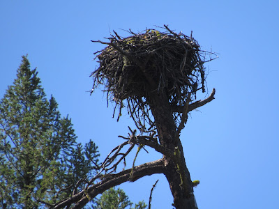 nest Burney Falls California