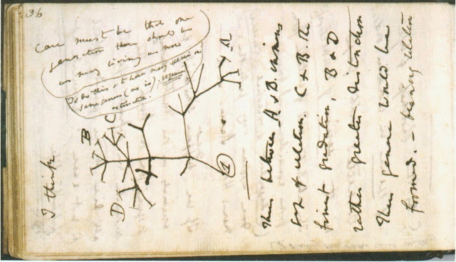 1837 notebook sketch by Darwin Tree of Life. Illustrated By . . . marchmatron.com