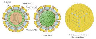 Makalah Biologi Mengenai Virus Zika