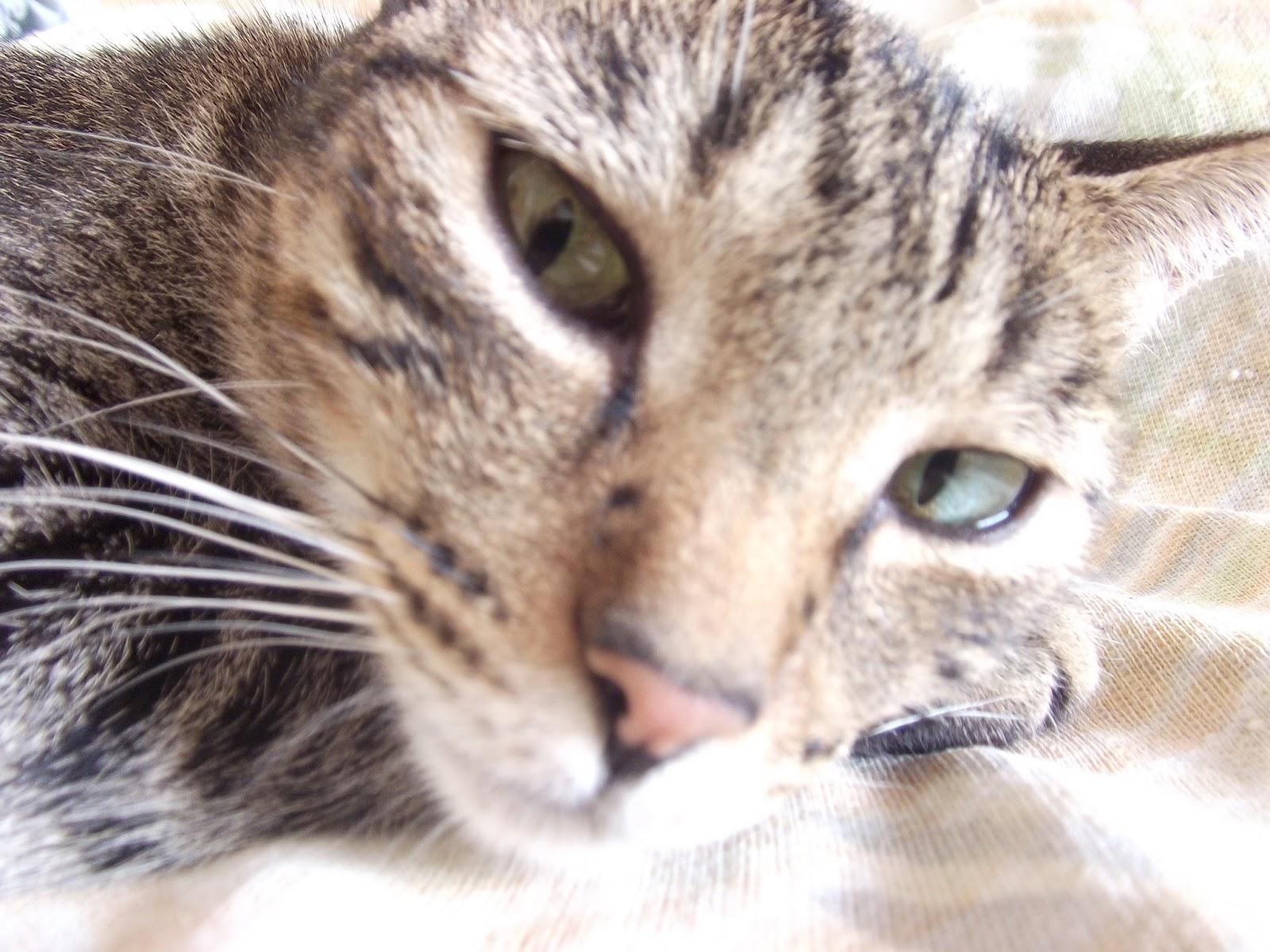 ad0d08e36c5 Meu Filho Pet: Gato Hiperativo