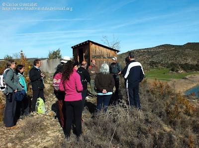 http://www.biodiversidadvirtual.org/insectarium/V-Testing-de-biodiversidad-Punto-BV-Espacio-Pirineos-OCB-Baja-Ribagorza-Lagunas-karsticas-de-Estana-img970800.html