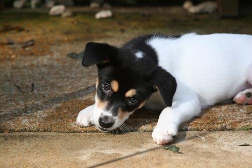 Rosie's Rascals Pet Rescue
