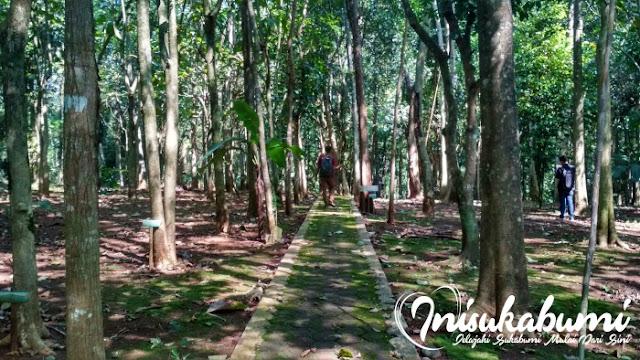 Rindangnya hutan kota Kibatai
