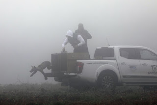 Η υπέροχη στιγμή που πέντε ορφανά αρκουδάκια του Αρκτούρου αφήνονται ελεύθερα στη φύση