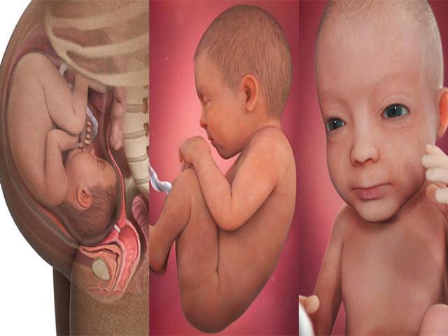 Ảnh siêu âm 3D tuyệt đẹp về sự phát triển của thai nhi theo từng tuần