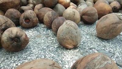Khasiat air kelapa untuk obat tubuh