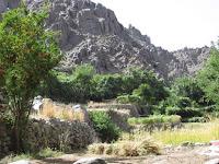 Apples-of-Balochistan