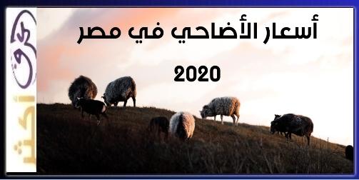 منافذ بيع الاضاحي العيد 2020