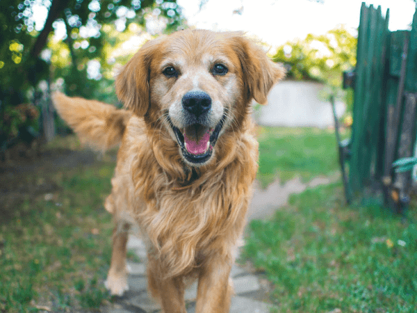 Finding The Perfect Supplements For Our Pets and Their Needs Is Easy