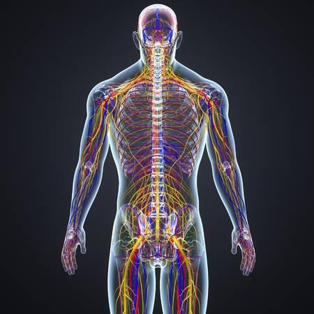 đường truyền xung não