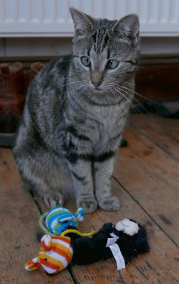 A cross-eyed tabby cat with toys