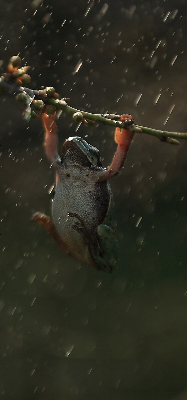 A frog weathering the storm.
