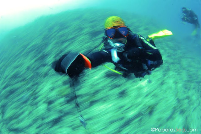 Scuba diving, Underwater Photography, Learn Scuba, Learn Photography